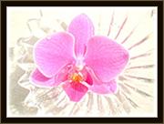 蘭の写真館